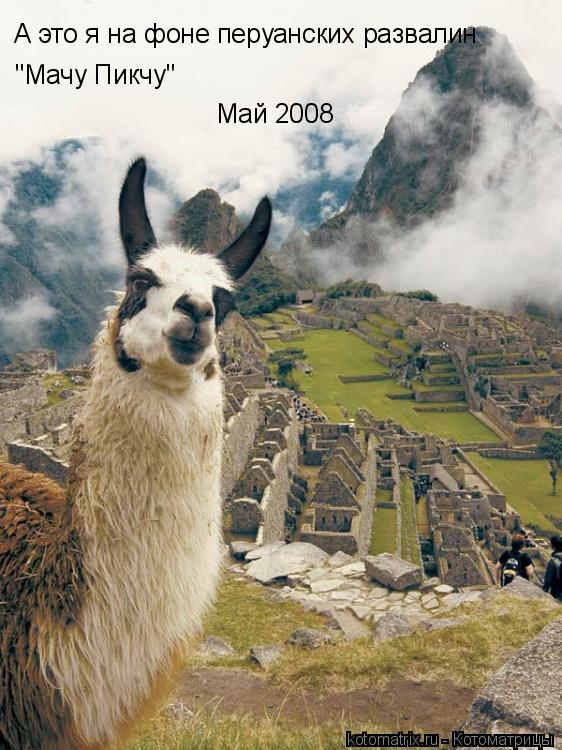 """Котоматрица: А это я на фоне перуанских развалин  """"Мачу Пикчу"""" Май 2008"""