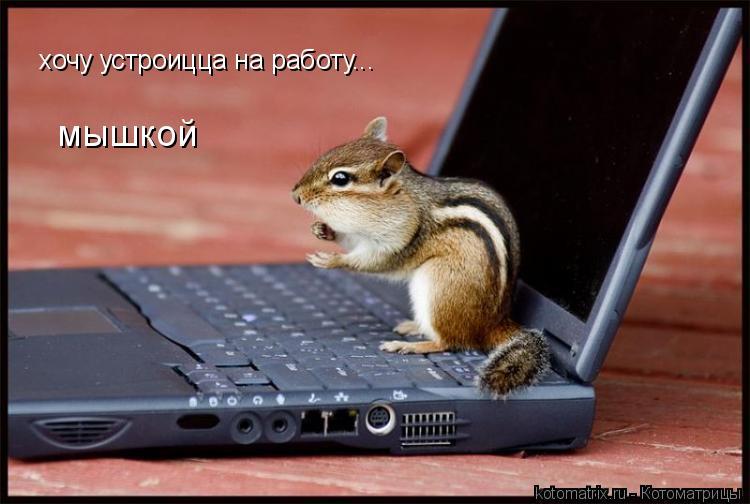 Котоматрица: хочу устроицца на работу... мышкой
