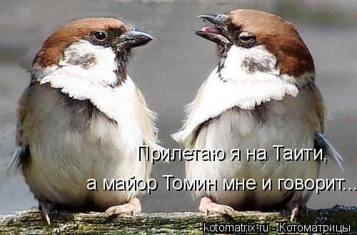 Котоматрица: Прилетаю я на Таити, а майор Томин мне и говорит...