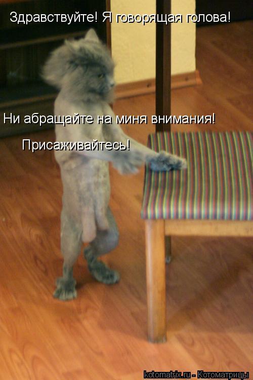 Котоматрица: Здравствуйте! Я говорящая голова! Ни абращайте на миня внимания! Присаживайтесь!