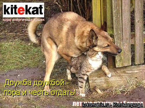 Котоматрица: Дружба дружбой - пора и честь отдать!