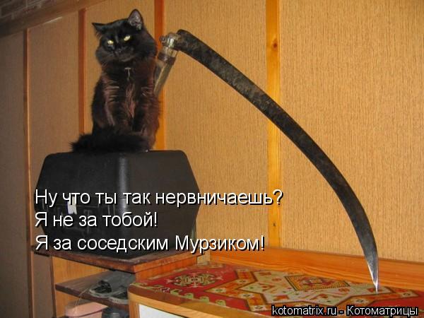 Котоматрица: Ну что ты так нервничаешь? Я не за тобой! Я за соседским Мурзиком!