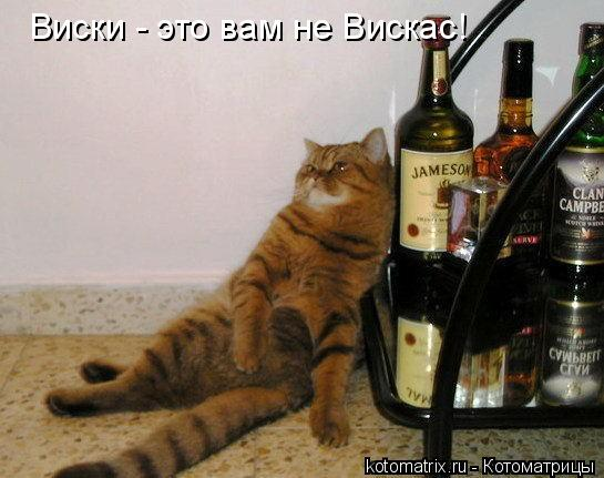 Котоматрица: Виски - это вам не Вискас!