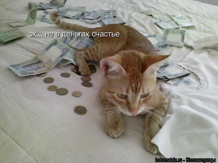 Котоматрица: эх... не в деньгах счастье