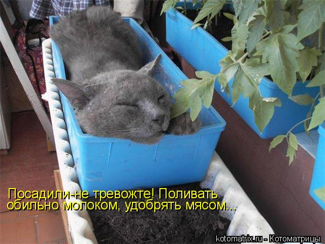 Котоматрица: Посадили-не тревожте! Поливать обильно молоком, удобрять мясом...