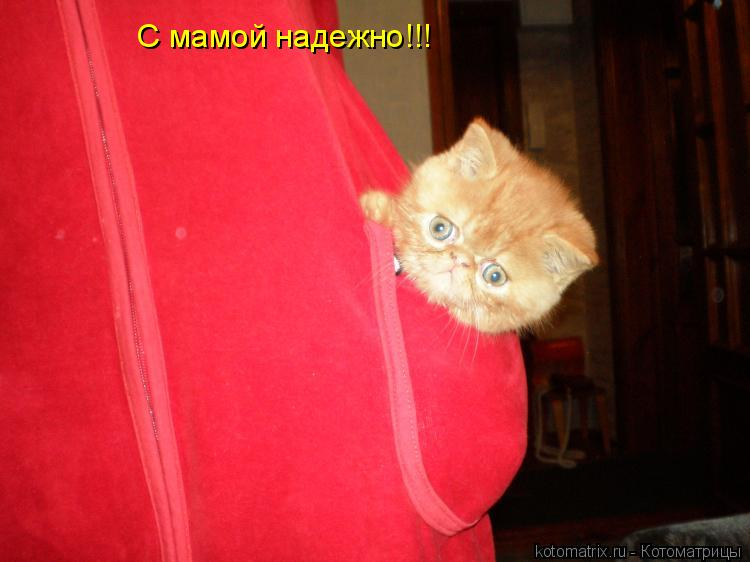 Котоматрица: С мамой надежно!!!