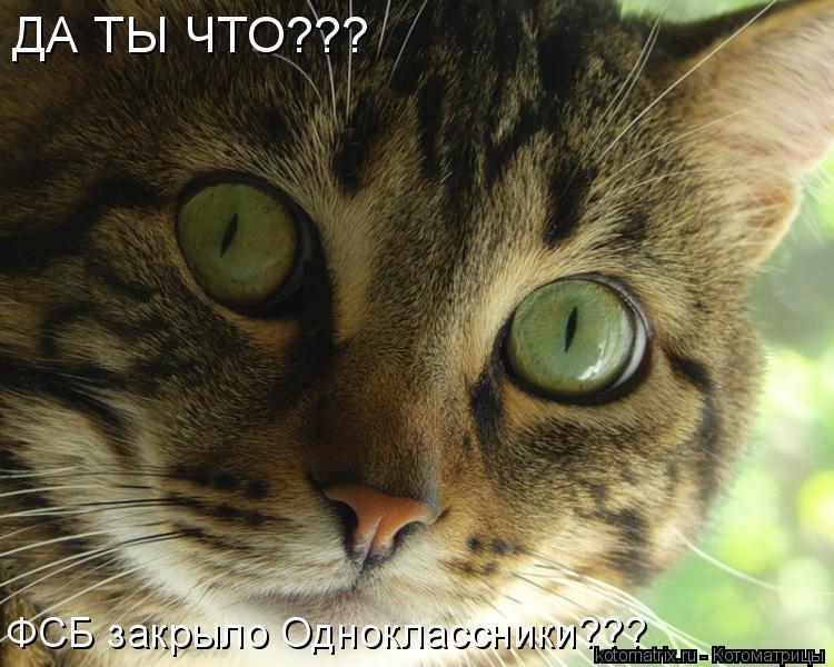 Котоматрица: ДА ТЫ ЧТО??? ФСБ закрыло Одноклассники???