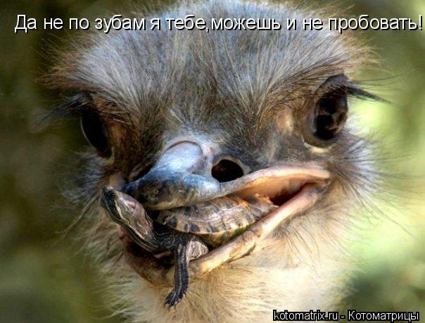 Котоматрица: Да не по зубам я тебе,можешь и не пробовать!
