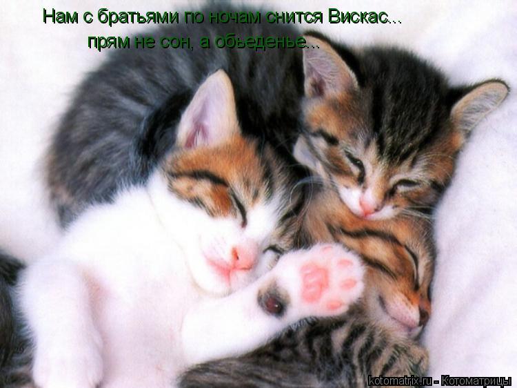 Котоматрица: Нам с братьями по ночам снится Вискас... прям не сон, а обьеденье...