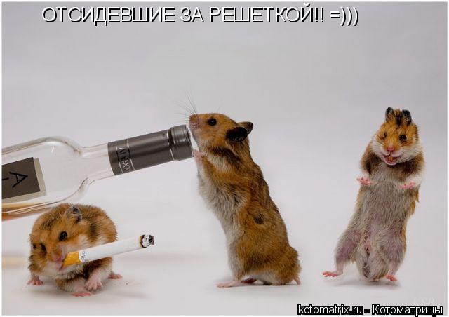 Котоматрица: ОТСИДЕВШИЕ ЗА РЕШЕТКОЙ!! =)))