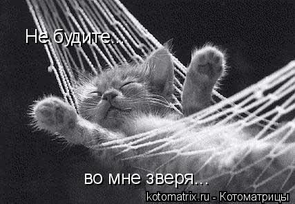 Котоматрица: Не будите... во мне зверя...