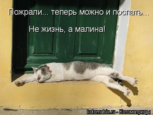 Котоматрица: Пожрали... теперь можно и поспать... Не жизнь, а малина!