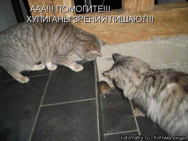 Котоматрица: ААА!!! ПОМОГИТЕ!!! ХУЛИГАНЫ ЗРЕНИЯ ЛИШАЮТ!!!