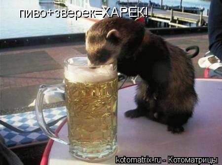 Котоматрица: пиво+зверек=ХАРЕК!