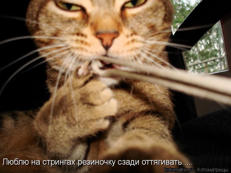 Котоматрица: Люблю на стрингах резиночку сзади оттягивать.....