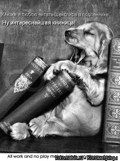 Котоматрица: КАк же я люблю читать Шекспира в подленнике... Ну интереснейшая книжица!