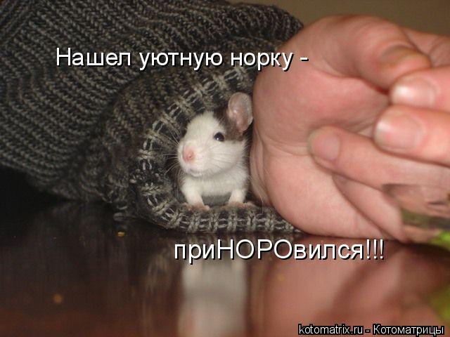 Котоматрица: Нашел уютную норку - приНОРОвился!!!