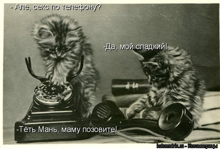 Котоматрица: - Алё, секс по телефону? -Да, мой сладкий! -Тёть Мань, маму позовите!
