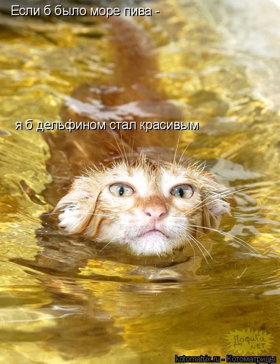 Котоматрица: Если б было море пива - я б дельфином стал красивым