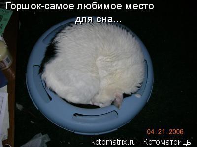 Котоматрица: Горшок-самое любимое место  для сна...