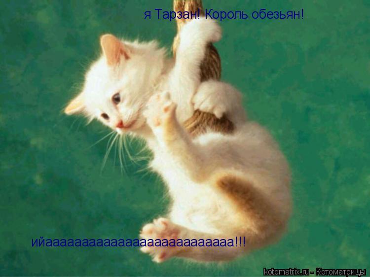 Котоматрица: я Тарзан! Король обезьян! ийаааааааааааааааааааааааааа!!!