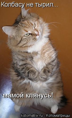 Котоматрица: Колбасу не тырил... мамой клянусь!