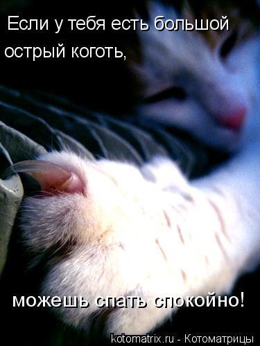 Котоматрица: Если у тебя есть большой острый коготь, можешь спать спокойно!