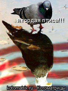 Котоматрица: я гордая птиса!!!