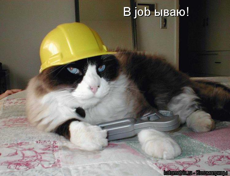 Котоматрица: В job ываю!