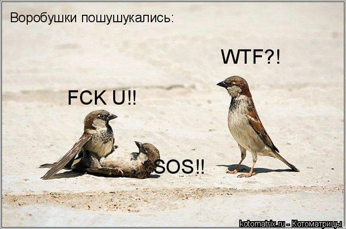 Котоматрица: WTF?! FCK U!! SOS!! Воробушки пошушукались: