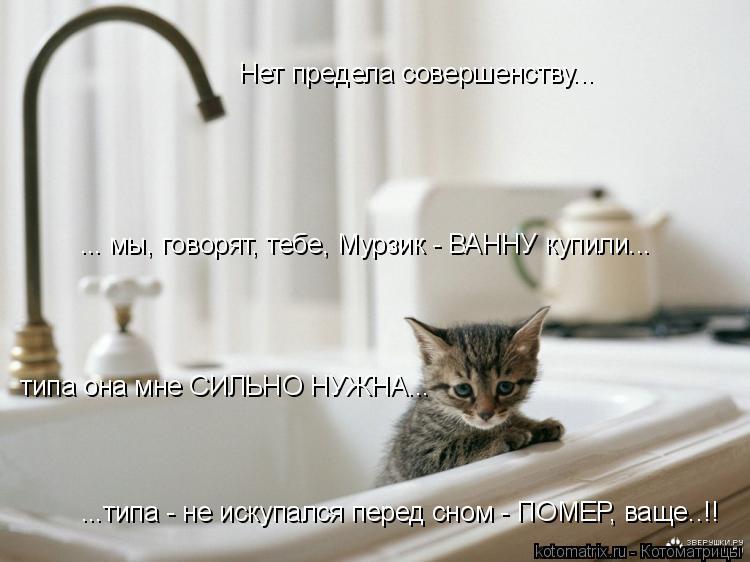 Котоматрица: Нет предела совершенству... ... мы, говорят, тебе, Мурзик - ВАННУ купили... типа она мне СИЛЬНО НУЖНА... ...типа - не искупался перед сном - ПОМЕР, ва