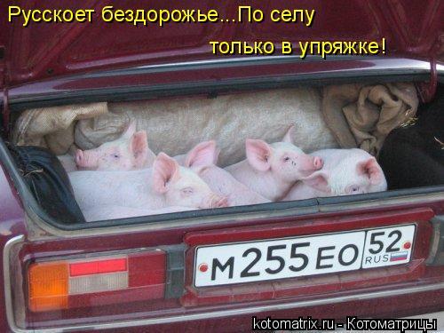 Котоматрица: Русскоет бездорожье...По селу только в упряжке!