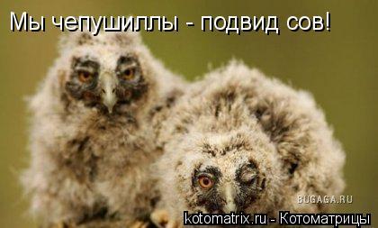 Котоматрица: Мы чепушиллы - подвид сов!