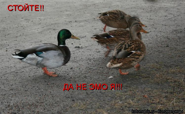 Котоматрица: СТОЙТЕ!!  ДА НЕ ЭМО Я!!!