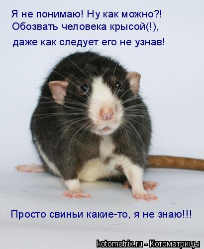 Котоматрица: Я не понимаю! Ну как можно?! Обозвать человека крысой(!),  даже как следует его не узнав! Просто свиньи какие-то, я не знаю!!!