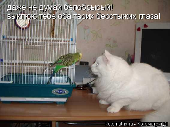 Котоматрица: даже не думай белобрысый! выклюю тебе оба твоих бесстыжих глаза!
