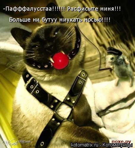 Котоматрица: -Пафффалусстаа!!!!!! Расфисыте миня!!! Больше ни бутуу миукать носью!!!!