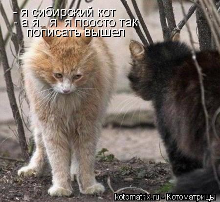Котоматрица: - я сибирский кот - а я.. я  я просто так  пописать вышел