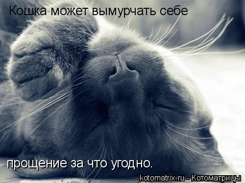 Котоматрица: Кошка может вымурчать себе  прощение за что угодно.