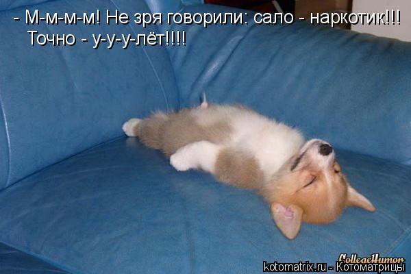 Котоматрица: - М-м-м-м! Не зря говорили: сало - наркотик!!!  Точно - у-у-у-лёт!!!!