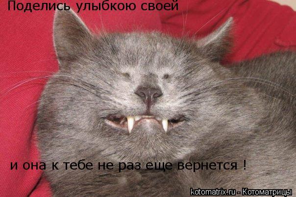 Котоматрица: Поделись улыбкою своей и она к тебе не раз еще вернется !