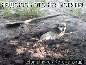 Котоматрица: надеюсь это не могила.