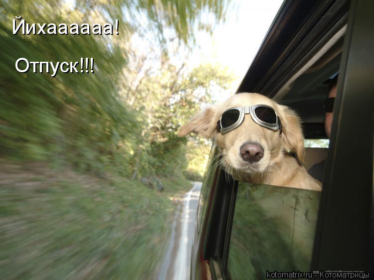 Котоматрица: Йихаааааа! Отпуск!!!