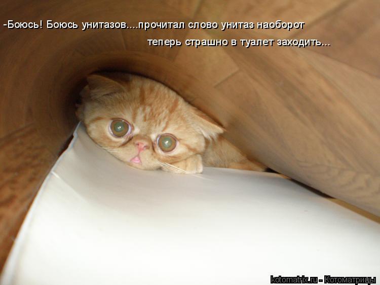 Котоматрица: -Боюсь! Боюсь унитазов....прочитал слово унитаз наоборот  теперь страшно в туалет заходить...