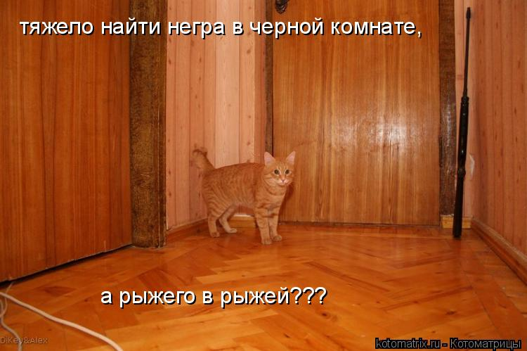 Котоматрица: тяжело найти негра в черной комнате,  а рыжего в рыжей???