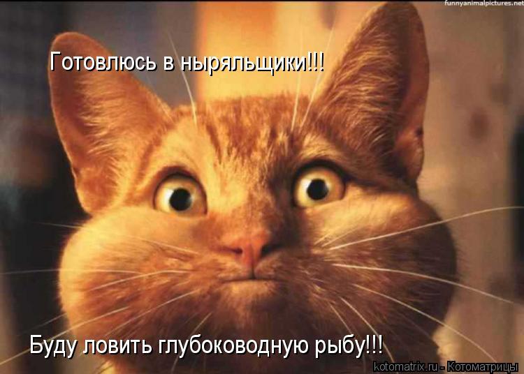 Котоматрица: Готовлюсь в ныряльщики!!! Буду ловить глубоководную рыбу!!!