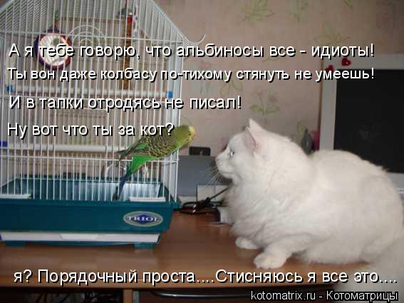 Котоматрица: А я тебе говорю, что альбиносы все - идиоты! И в тапки отродясь не писал! Ну вот что ты за кот? я? Порядочный проста....Стисняюсь я все это.... Ты в