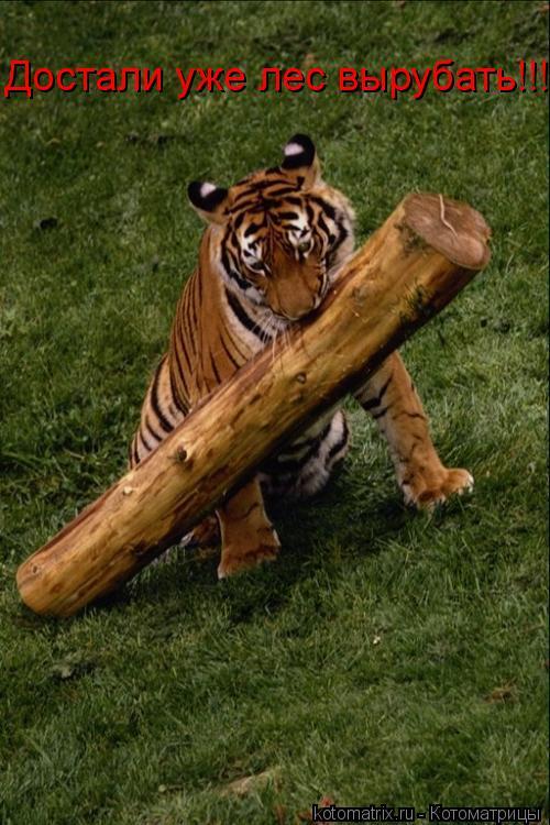 Котоматрица: Достали уже лес вырубать!!!