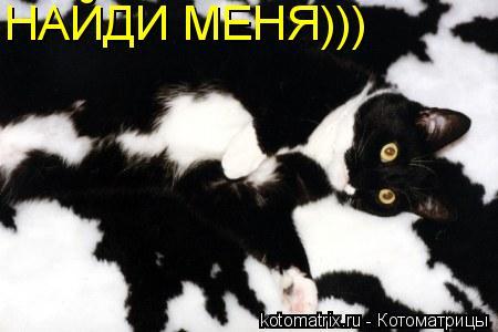 Котоматрица: НАЙДИ МЕНЯ)))