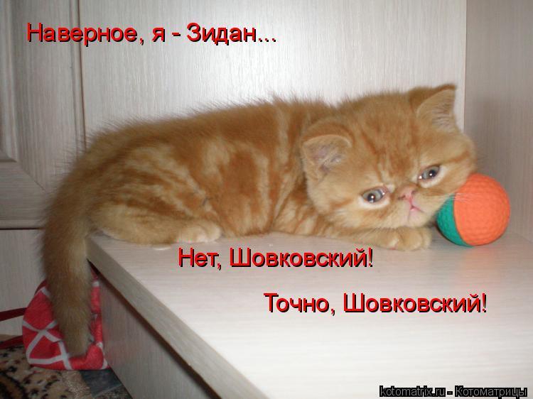 Котоматрица: Наверное, я - Зидан... Нет, Шовковский! Точно, Шовковский!